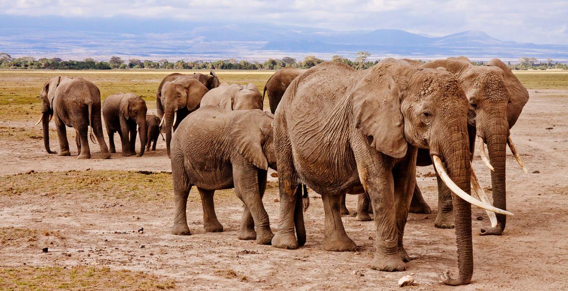 Tag på safari i sommerferien