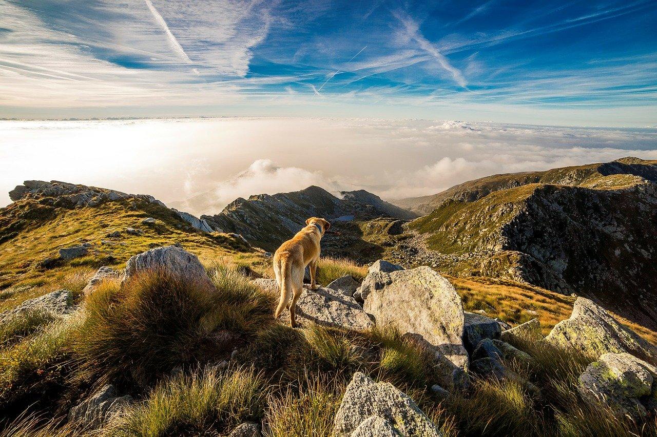 Hund-bjerg
